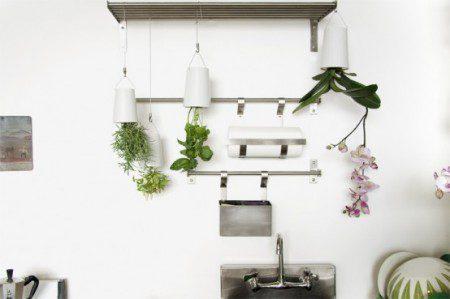 фото растений в доме