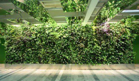 необычный вертикальный сад